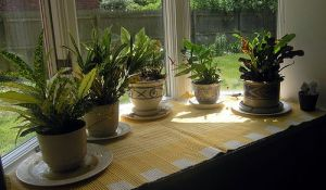 household plants help keep home's air clean